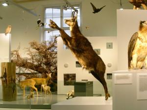*geschlossen* Naturmuseum Winterthur