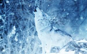 """""""Peter und der Wolf"""""""